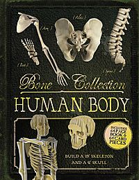 Bone Collection