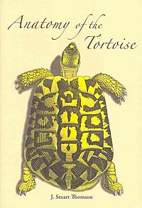 The Anatomy of the Tortoise